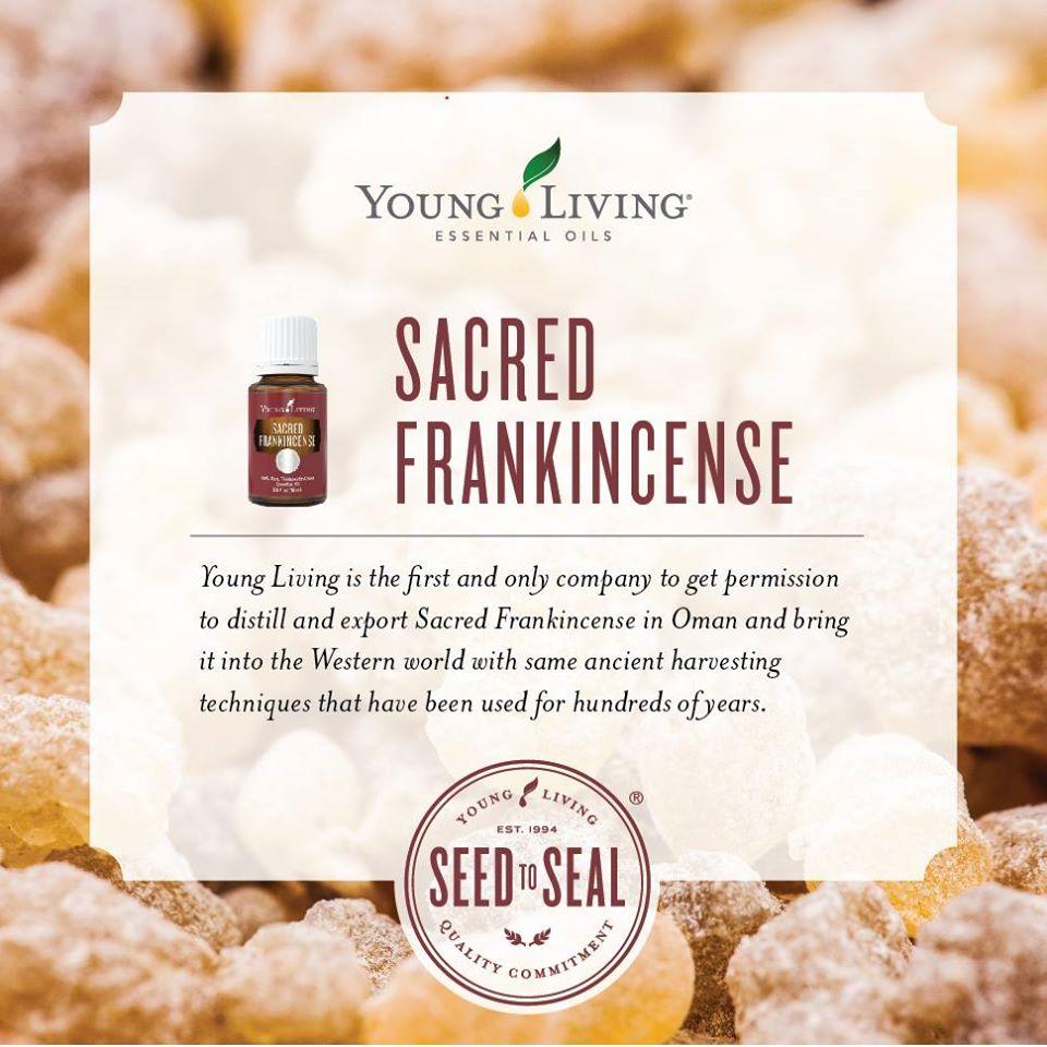 神聖乳香精油 Sacred frankincense-與神聖連結的頻率